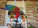 SOBE - Greenwing Macaw